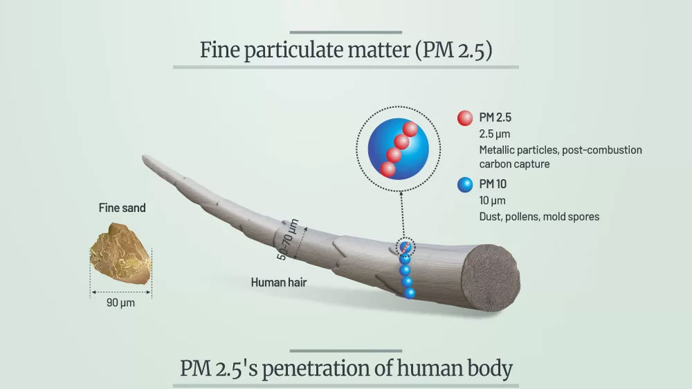 How air pollution particles travel through human body