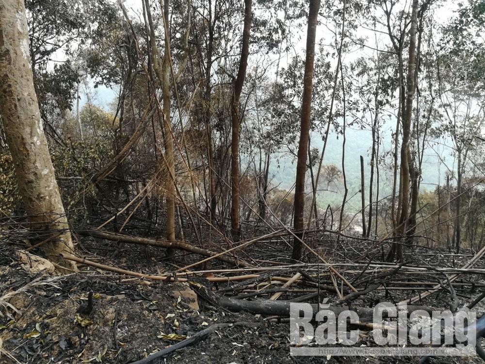phá rừng tại lục ngạn, rừng đèo gia, Rừng tự nhiên Đèo Gia lại bị xâm hại