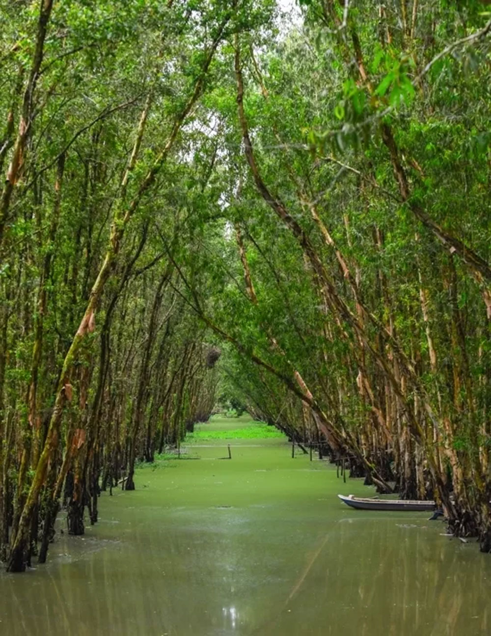 Get into the flow, Mekong Delta, mangrove forest, Tra Su,  long waterways,  flooding season