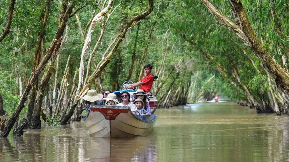 Get into the flow in a Mekong Delta mangrove forest