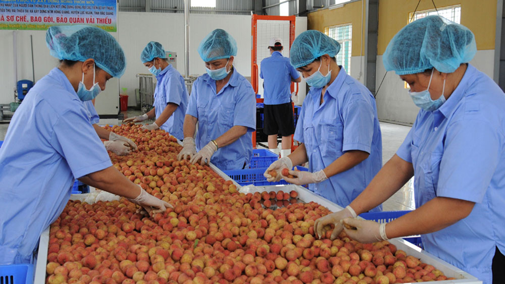 Bac Giang boosts farm produce trademark development towards clean agriculture
