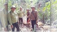 Cần biện pháp mạnh để chấm dứt việc phá, lấn đất rừng ở Đèo Gia