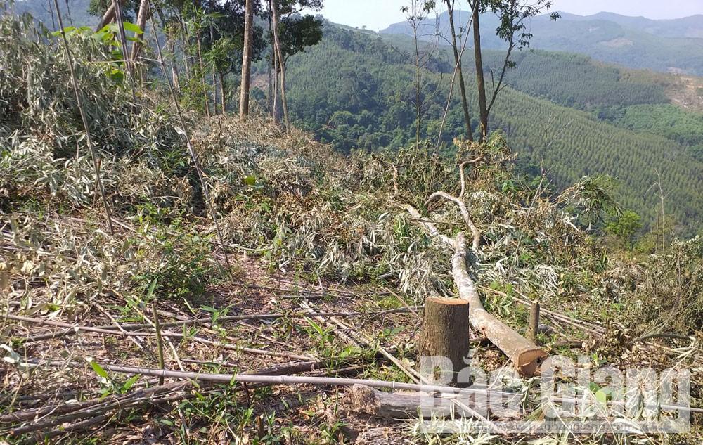 Lục Ngạn, phá rừng ở đèo gia, Cần biện pháp mạnh, chấm dứt việc phá, lấn đất rừng, Đèo Gia