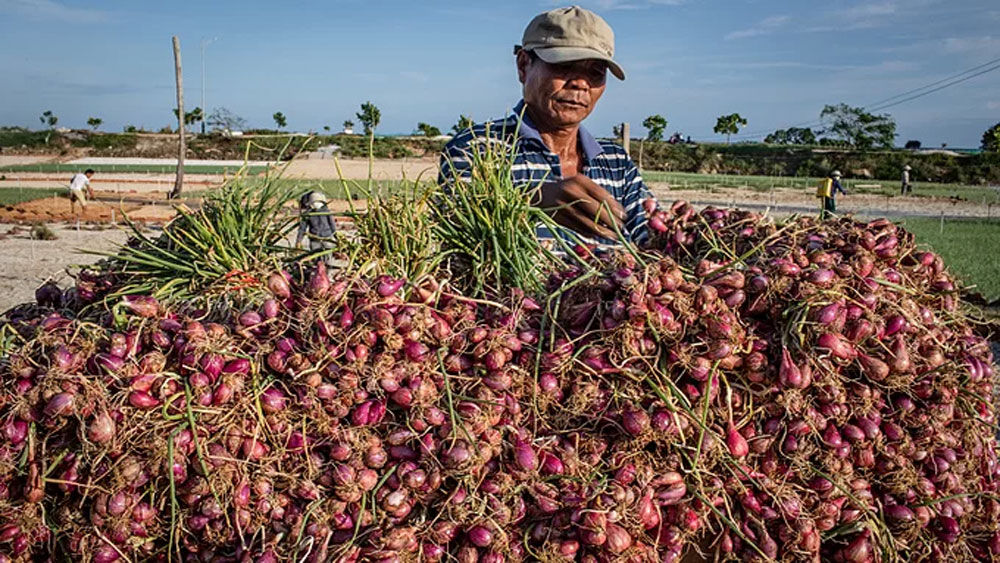 Vietnam, national portal, agricultural products' origin, agricultural produce,  national standard, smart agricultural technologies