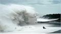 Đắm tàu do bão Hagibis: 1 người Việt mất tích, người còn lại thoát chết