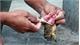 Đắk Lắk: 3 chị em bị ngộ độc sau khi ăn thịt cóc