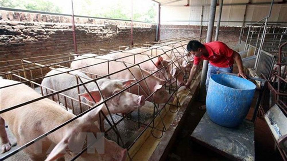Ổn định, giá thịt lợn, từ nay đến cuối năm