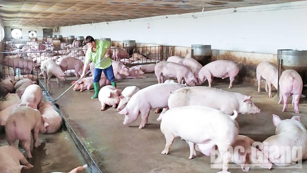 Bắc Giang, lợn thịt, ngành nông nghiệp, người dân