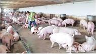 Đa dạng vật nuôi, bù đắp thiếu hụt lợn thịt