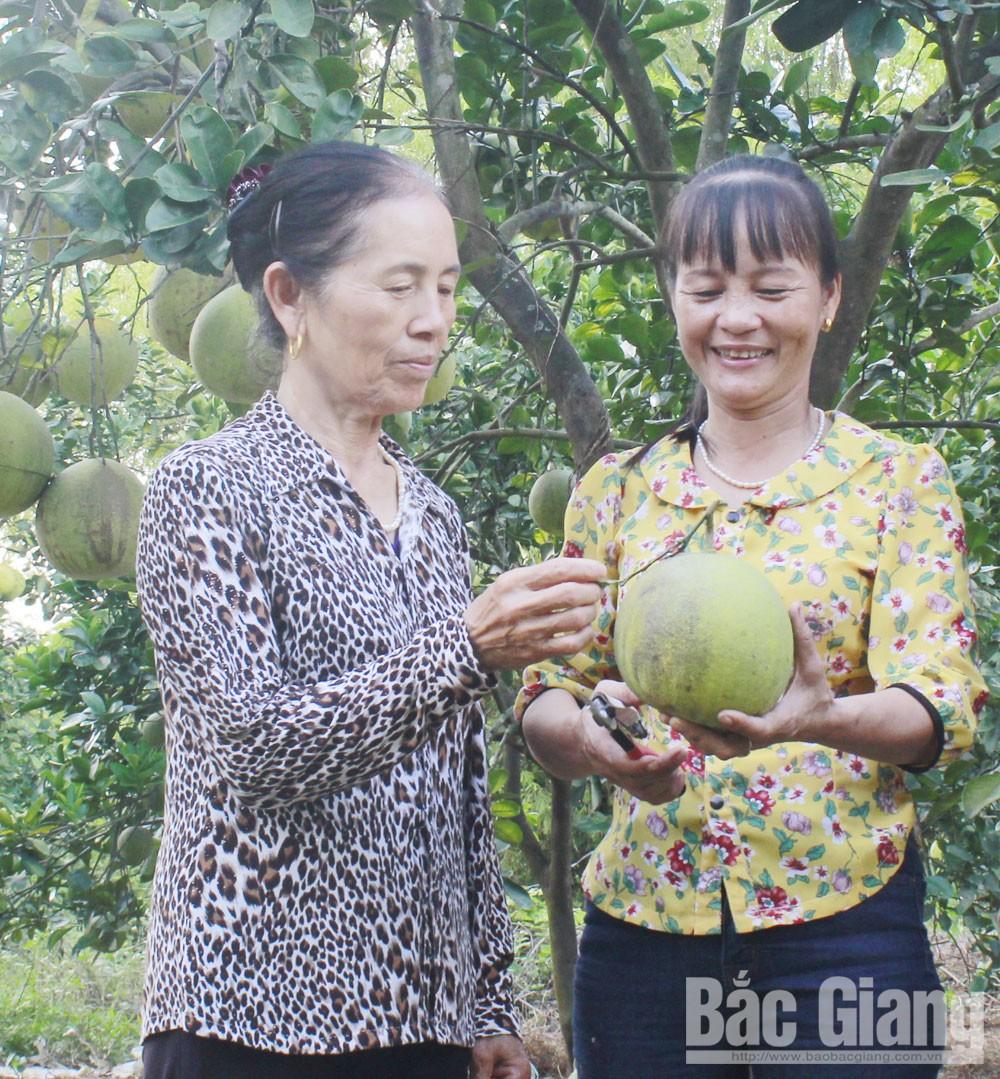 Bắc Giang, phụ nữ khởi nghiệp, phụ nữ, hội viên, làm chủ kinh tế, gia đình hạnh phúc