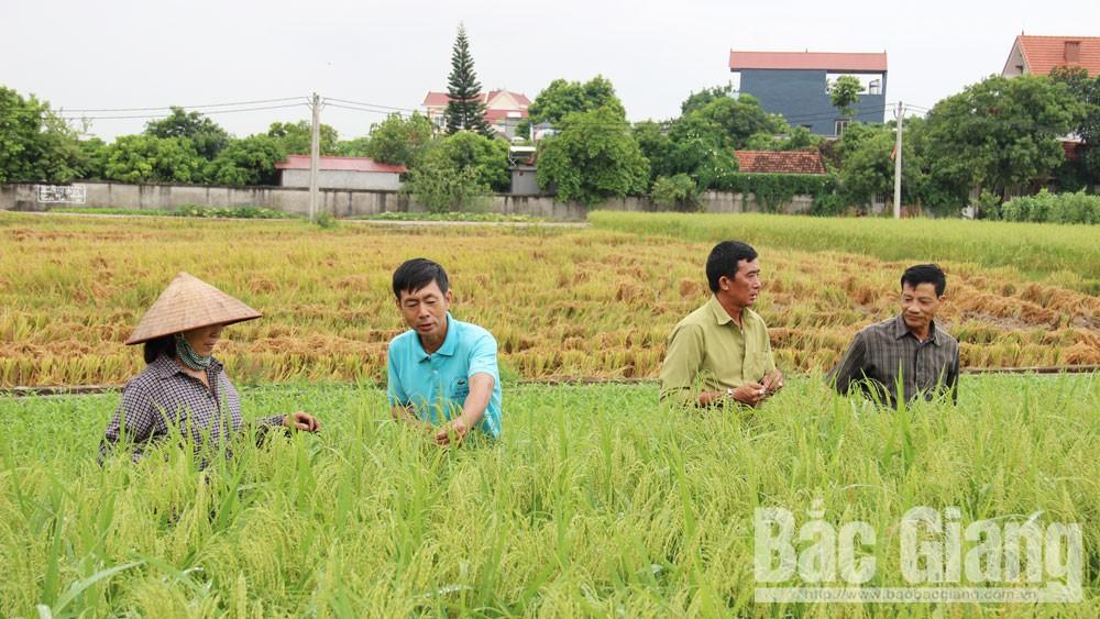 Lạng Giang, Bắc Giang,  bí thư chi bộ kiêm trưởng thôn,  trách nhiệm, lạm quyền