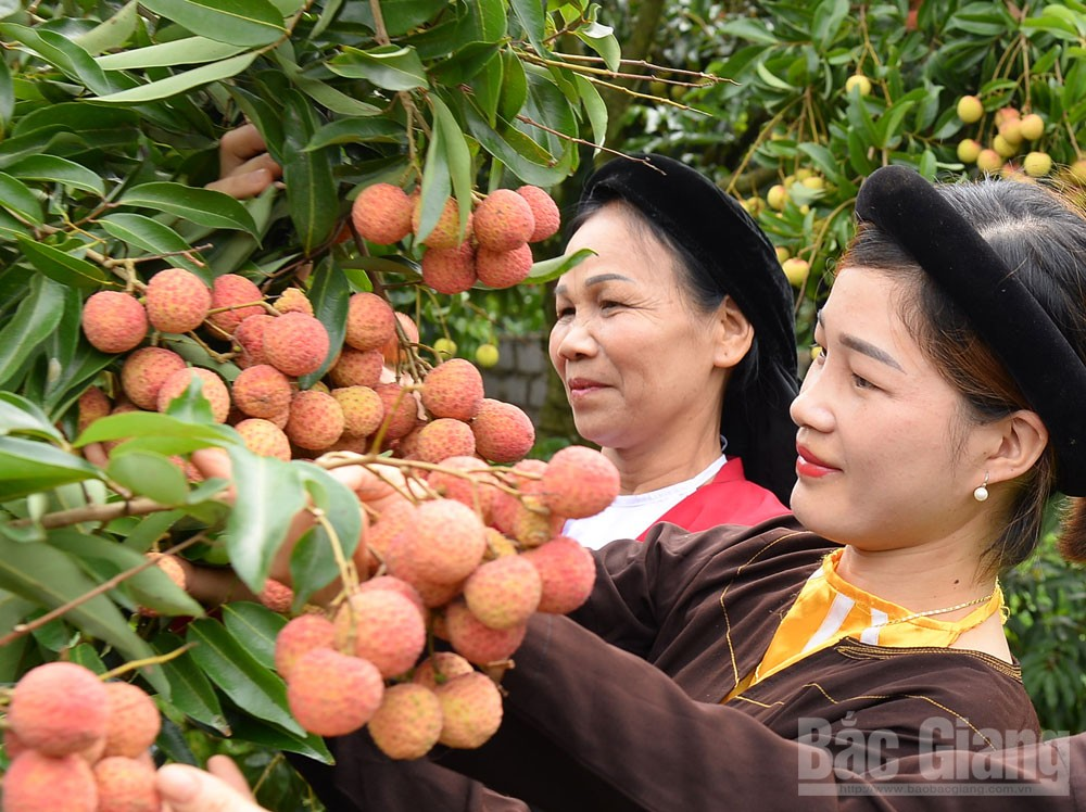 Bac Giang province, OCOP products, One Commune One Product, OCOP programme, key commodity brand, national products