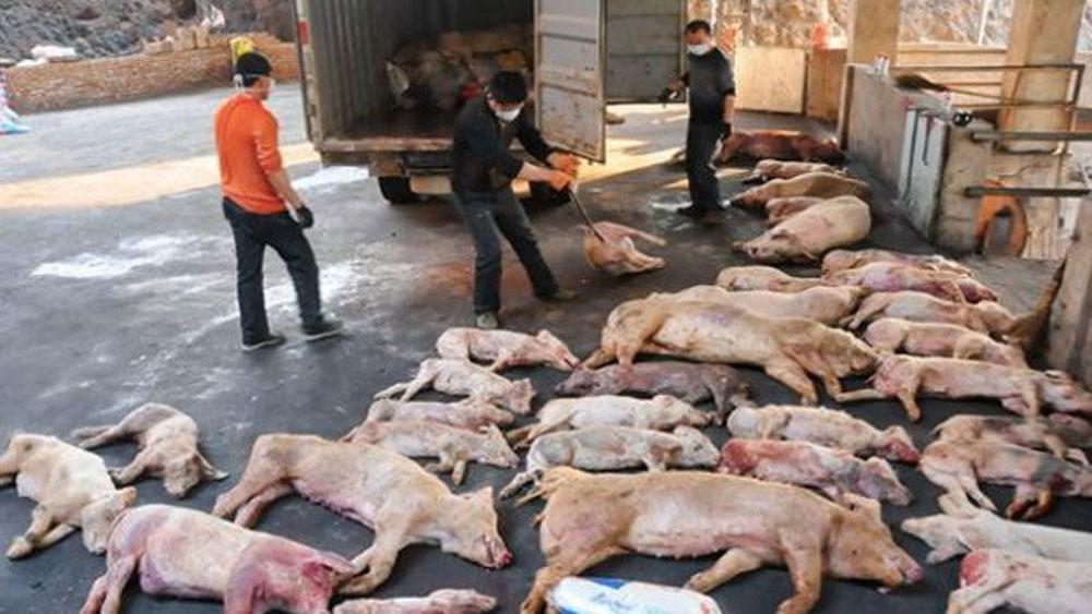 Trung Quốc, tìm ra, cấu trúc virus tả lợn châu Phi