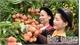 Công nhận 22 sản phẩm nông nghiệp tiêu biểu tỉnh Bắc Giang lần thứ II