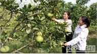 Quỹ quốc gia về việc làm: Thêm sinh kế cho đoàn viên Bắc Giang