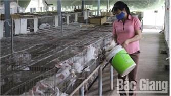 Thu nhập cao từ nuôi thỏ ở bản Rừng Dài