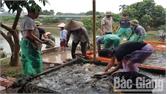 Huyện Lạng Giang (Bắc Giang) có nhiều mô hình kinh tế trang trại cho thu nhập cao