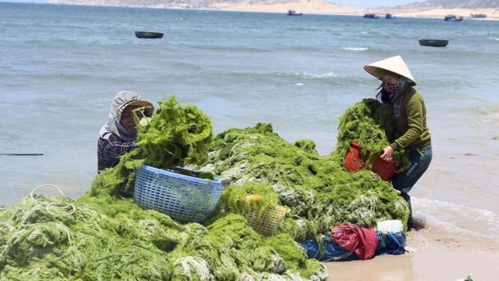 Vietnam, RoK, green economy, Conservation of Nature and Environment,  Korea Environmental Industry Association, environmental cooperation, environmental technologies