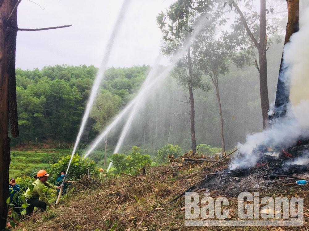 Lục Ngạn, diễn tập chữa cháy rừng, lục ngạn diễn tập chữa cháy rừng năm 2019