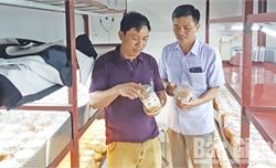 """Lạng Giang gắn thực hiện chương trình """"Mỗi xã một sản phẩm"""" với xây dựng nông thôn mới: Giải pháp thúc đẩy sản xuất theo chuỗi giá trị"""
