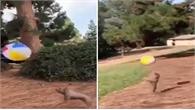 Chú chó thông minh tâng bóng điêu luyện
