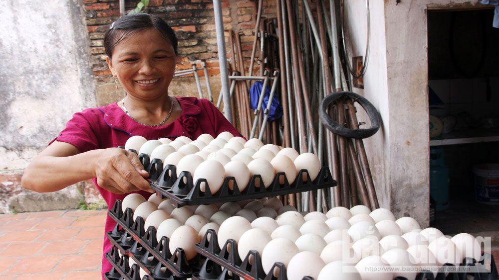việc làm, Quỹ quốc gia về việc làm, Bắc Giang