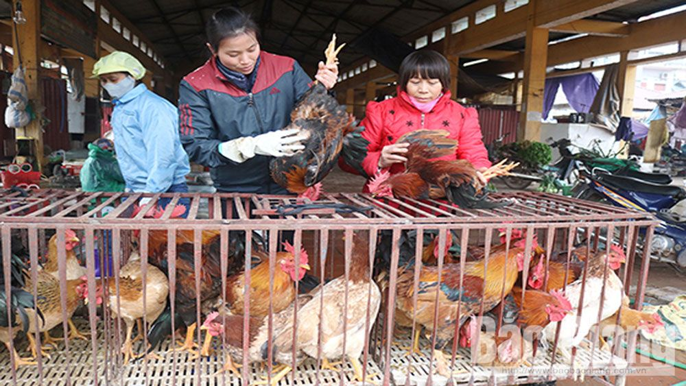 Expanding consumption market to Yen The hill chicken