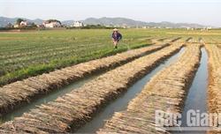 Phân bón lạ ở Lục Nam, Lục Ngạn được sản xuất từ phụ phẩm của đường mía