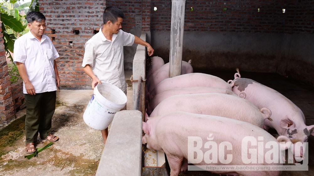 Giá lợn hơi, Gía lợn hơi tăng kỷ lục, tỉnh Bắc Giang