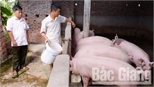Bắc Giang: Giá lợn hơi tăng kỷ lục, 72 nghìn đồng/kg