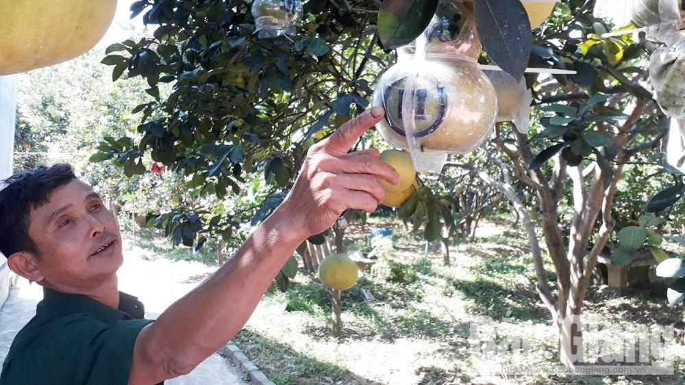 Hiệp Hòa: Dán tem truy xuất nguồn gốc các sản phẩm nông nghiệp tiêu biểu