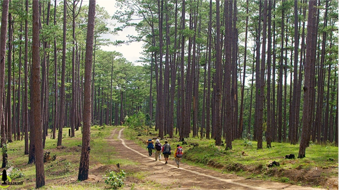 Four more Vietnamese sites recognized as ASEAN heritage parks