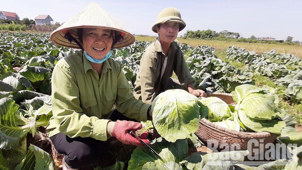 xã Tân Hưng, huyện Lạng Giang (Bắc Giang) được công nhận đạt chuẩn nông thôn mới (NTM).