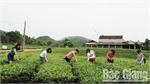 Xuan Lung Thac Nga green tourism