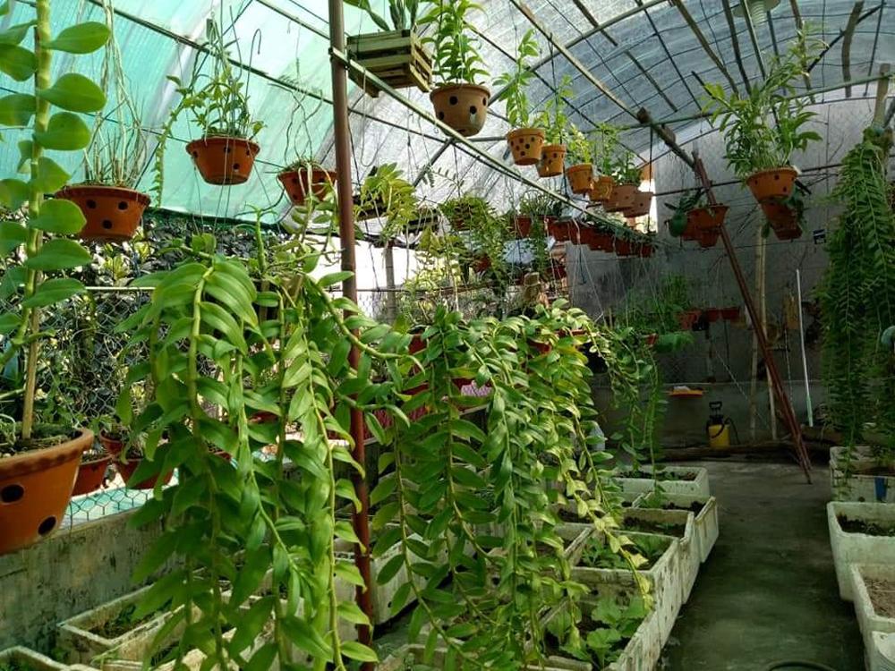 Trộm hoa lan, TP Bắc Giang, Công an TP