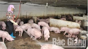 Cung ứng khoảng 20 nghìn tấn thịt lợn dịp Tết