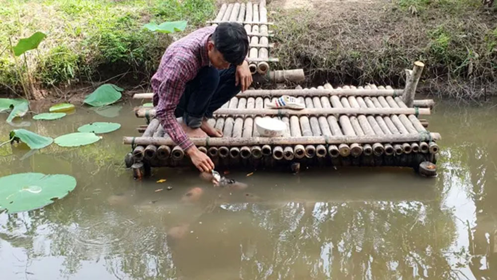 Quá độc, lạ Cần Thơ, đút từng thìa cơm cho cá ăn, đút cho em bé, anh Nguyễn Minh Chiến