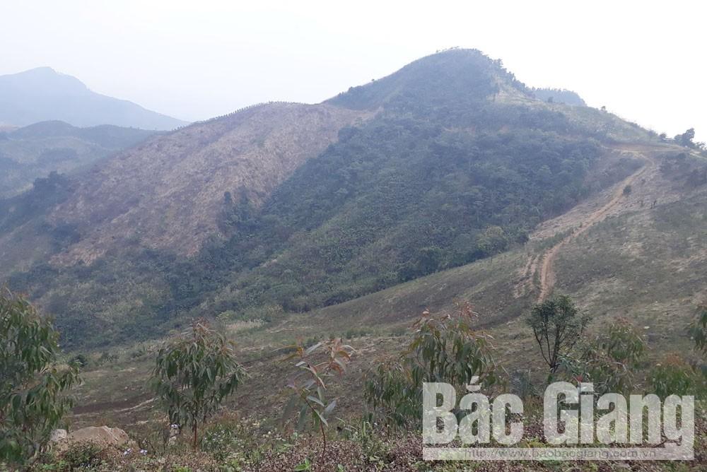 phá rừng, yên thế,  Yên Thế