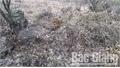 2 bị cáo phá rừng tại huyện Yên Thế lĩnh án hơn 6 năm tù
