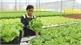 Vietnam, Netherlands enhance cooperation in agriculture