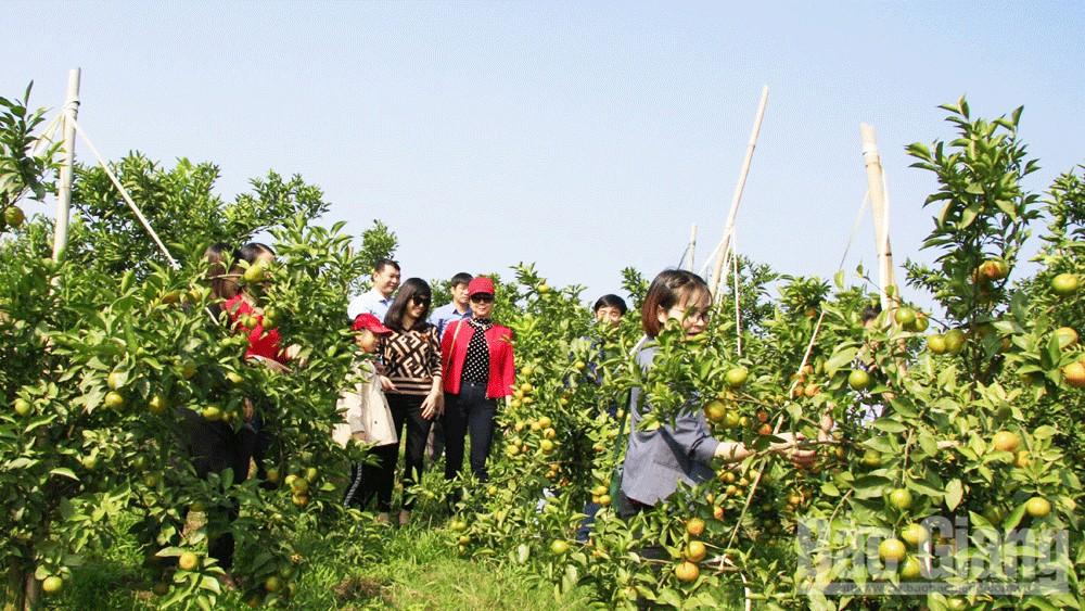 Du khách tham quan vườn cây ăn quả tại Lục Ngạn.  Ảnh: Thế Dũng