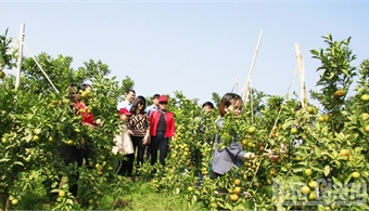 Orchards welcome visitors
