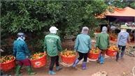Thu hoạch cam