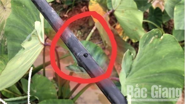 Xảy ra nhiều sự cố lưới điện do đạn súng hơi