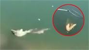 Cá bị tóm gọn vì sập bẫy 'mỹ nhân ngư'