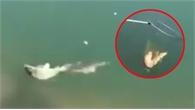 """Cá bị tóm gọn vì sập bẫy """"mỹ nhân ngư"""""""