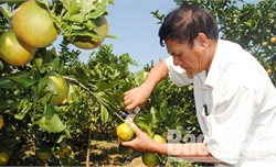 Gần 1 tỷ đồng tài trợ cho Hội chợ cam bưởi và các sản phẩm đặc trưng huyện Lục Ngạn