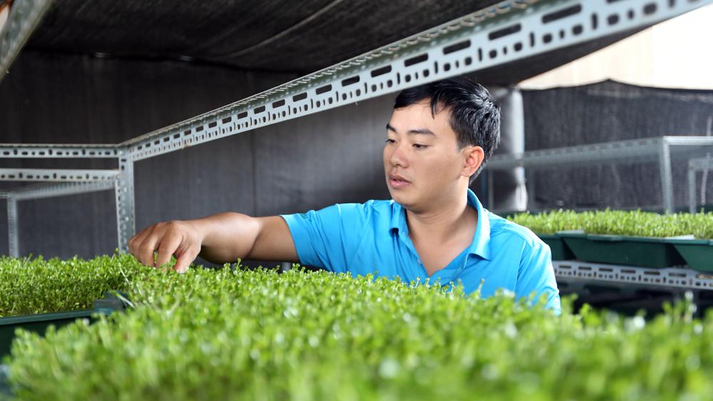 thanh niên khởi nghiệp, nông nghiệp sạch, Nguyễn Văn Tiến