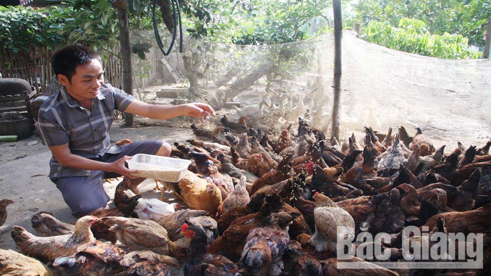 giảm nghèo, Sơn Động, hộ nghèo, tỷ lệ hồ nghèo, trồng rừng, bắc Giang