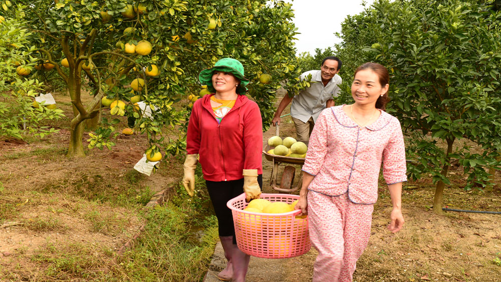 Lục Ngạn, Hội chợ cam, bưởi, Bắc Giang, cây ăn quả